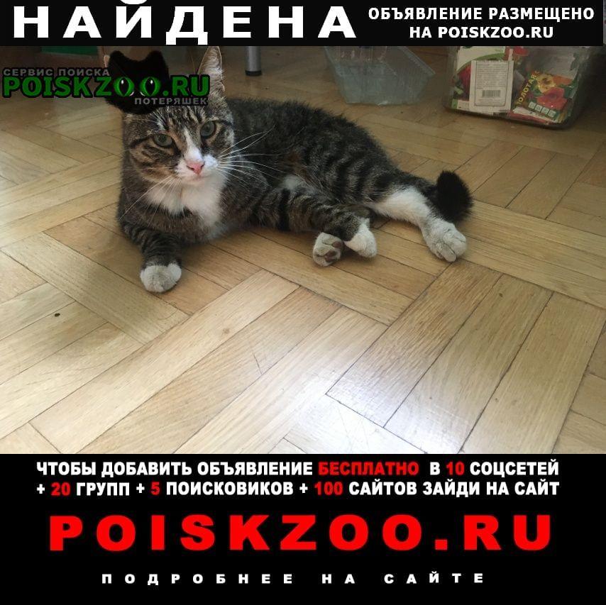 Найдена кошка рыбацкое метро Санкт-Петербург