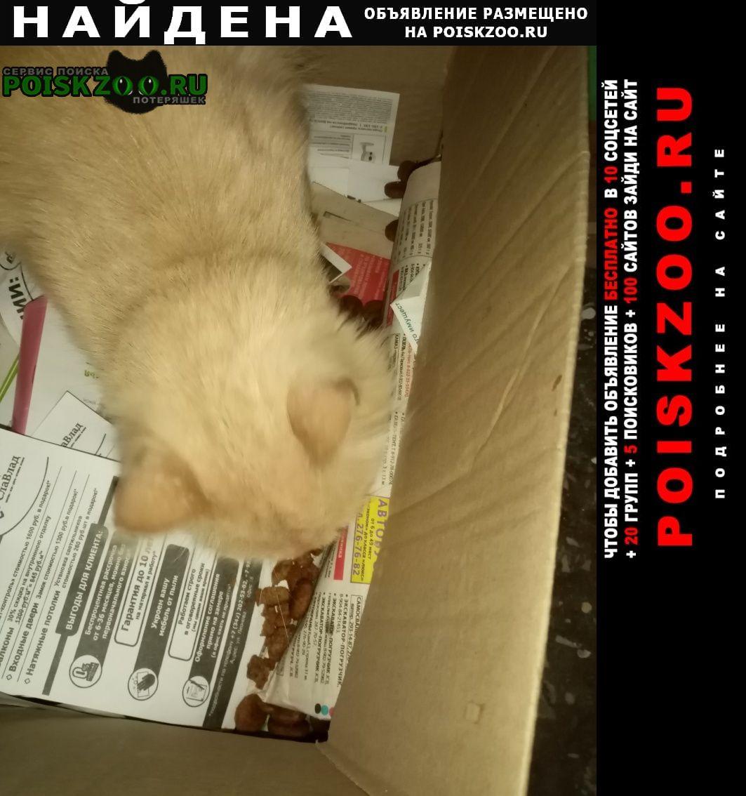 Найдена кошка Пермь