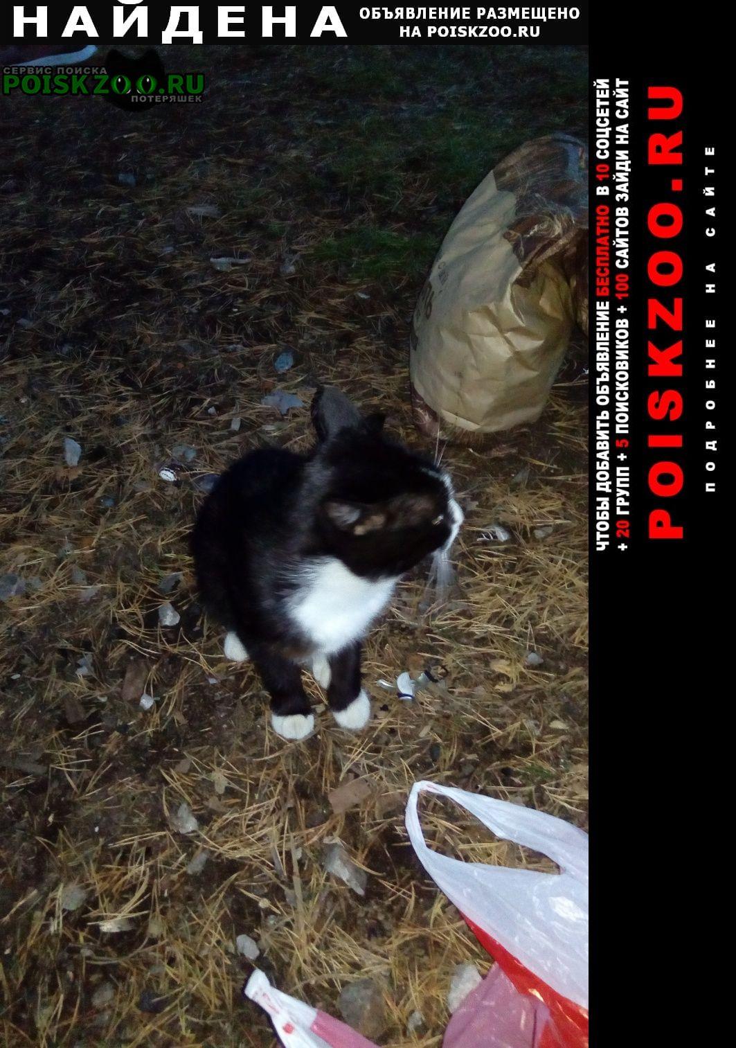 Найдена кошка с.кунгурка Дегтярск