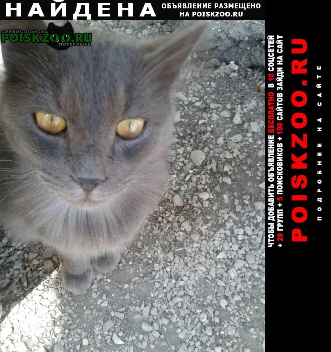 Найдена кошка кот Красноперекопск