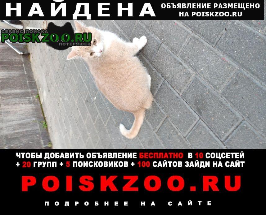 Найдена кошка Одинцово