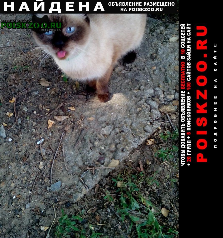 Найдена кошка Ростов-на-Дону