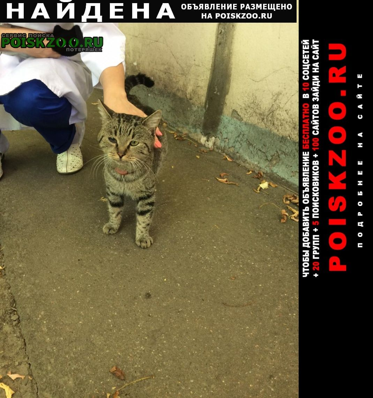Найдена кошка ласковый с красным ошейником Москва