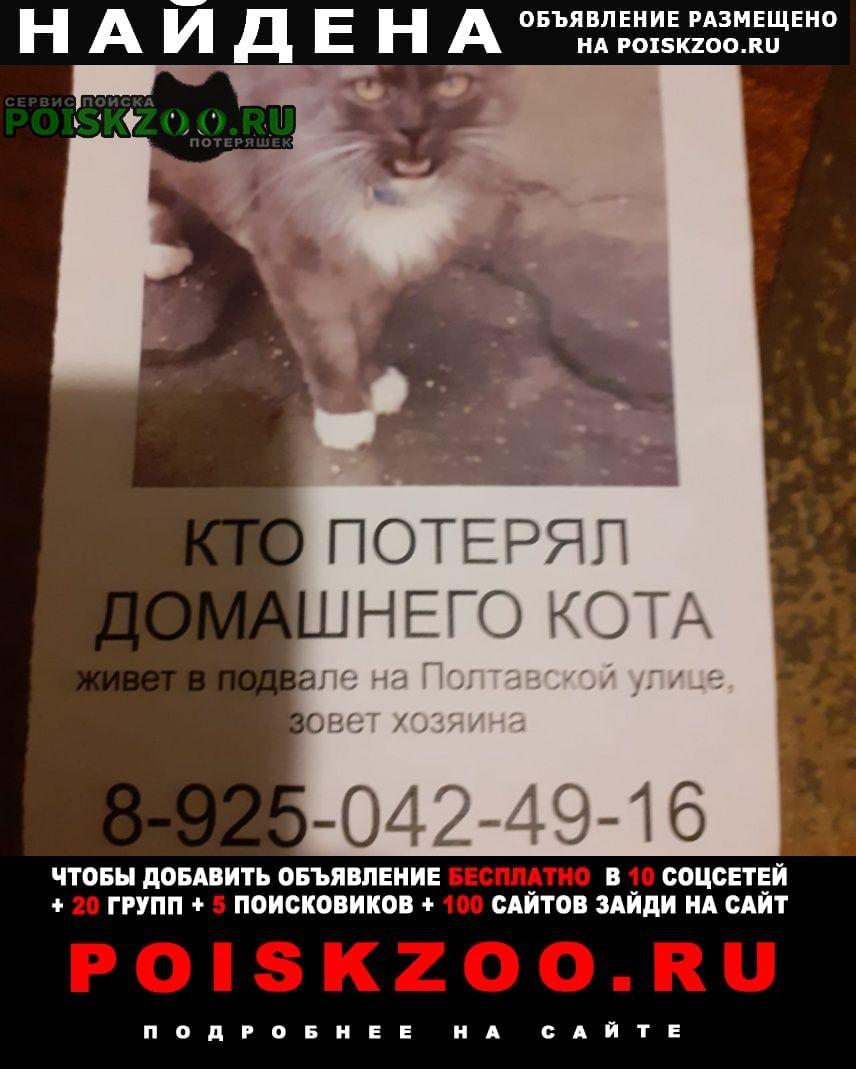 Найдена кошка животное в ошейнике.кот зовёт хозяина Москва