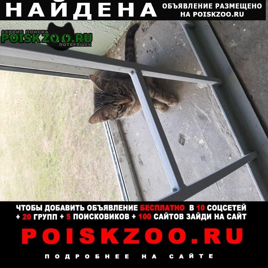 Найдена кошка котенок Балашиха