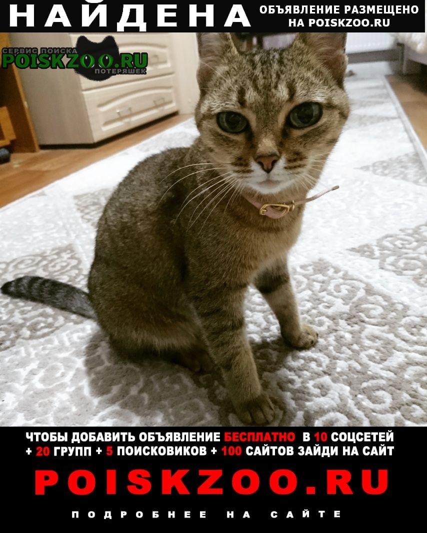 Найдена кошка Чебоксары