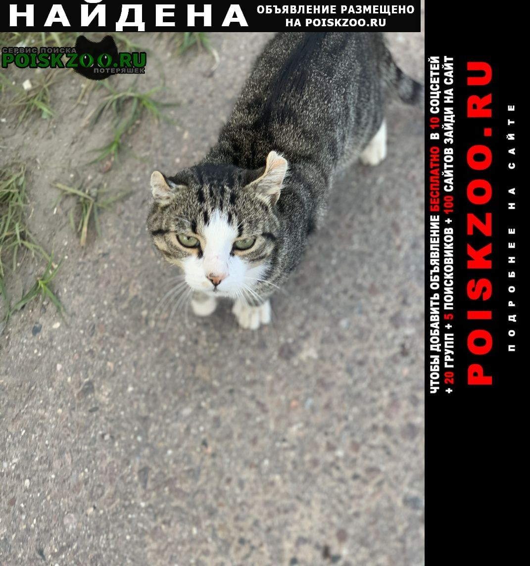 Найдена кошка кот Истра