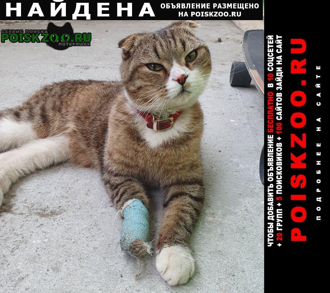 Найдена кошка кот на улице волгоградская 12 Казань