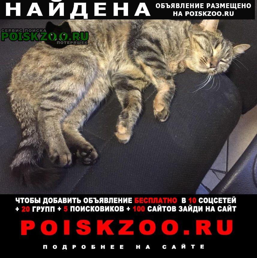 Найдена кошка на канонерском острове Санкт-Петербург