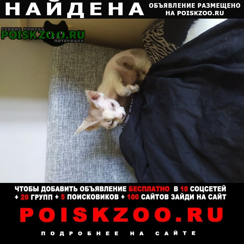 Найдена кошка Тула