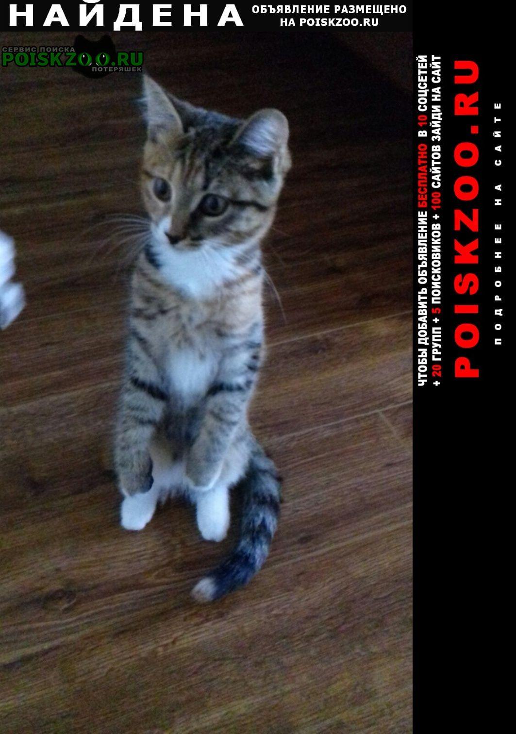 Найдена кошка котёнок. Люберцы