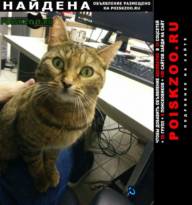 Найдена кошка..  кот с ошейником Тюмень