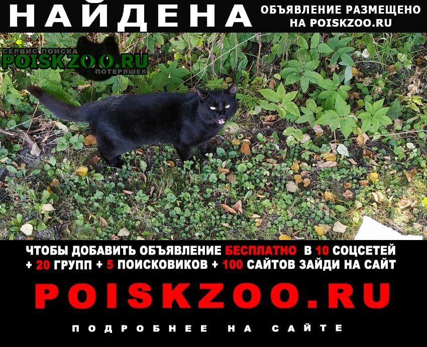 Найден кот черный. Мытищи