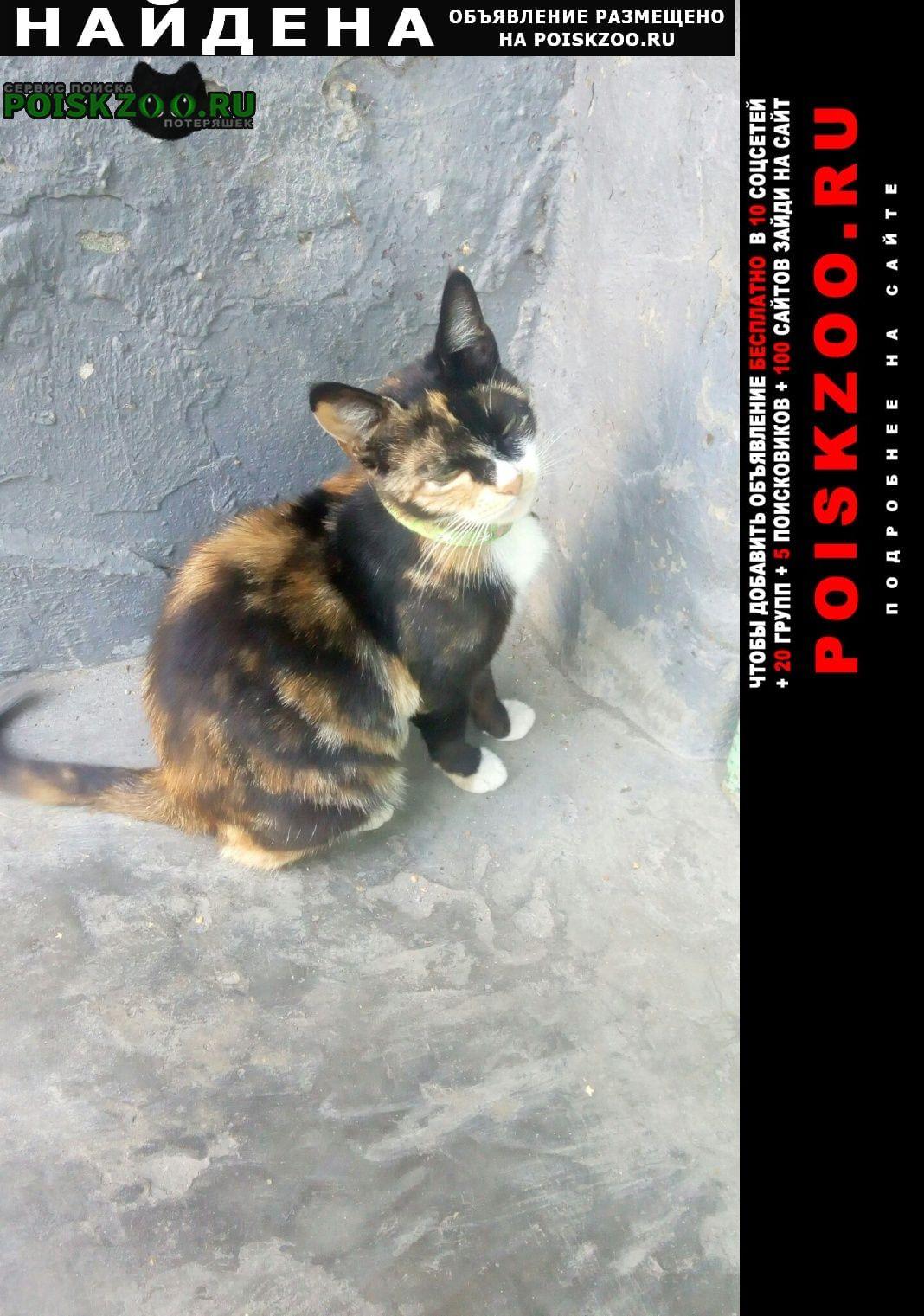 Найдена кошка черепахово окраса с ошейни Краснодар