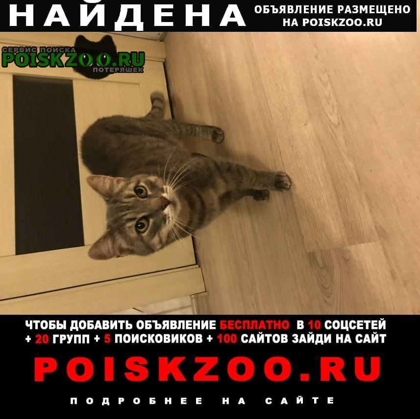 Найдена кошка 22.08. Долгопрудный