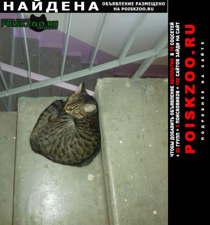 Найдена кошка район ботаника Екатеринбург