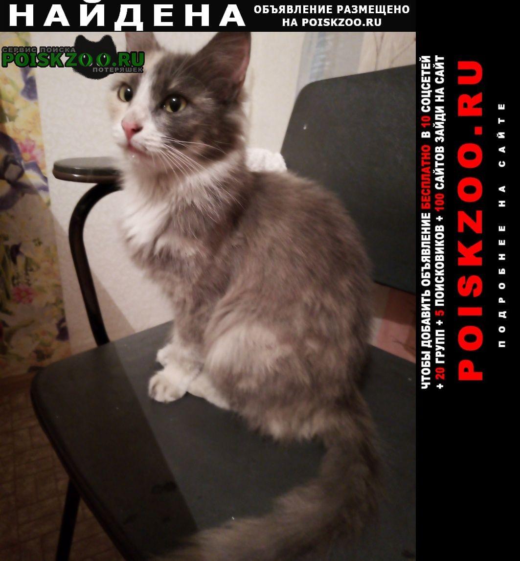 Найдена кошка ищем хозяев Санкт-Петербург