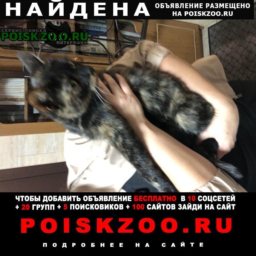 Найдена кошка бегала в районе ттк м.бауманская Москва