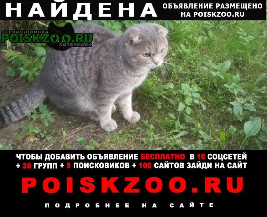 Найден кот 23 августа Софрино