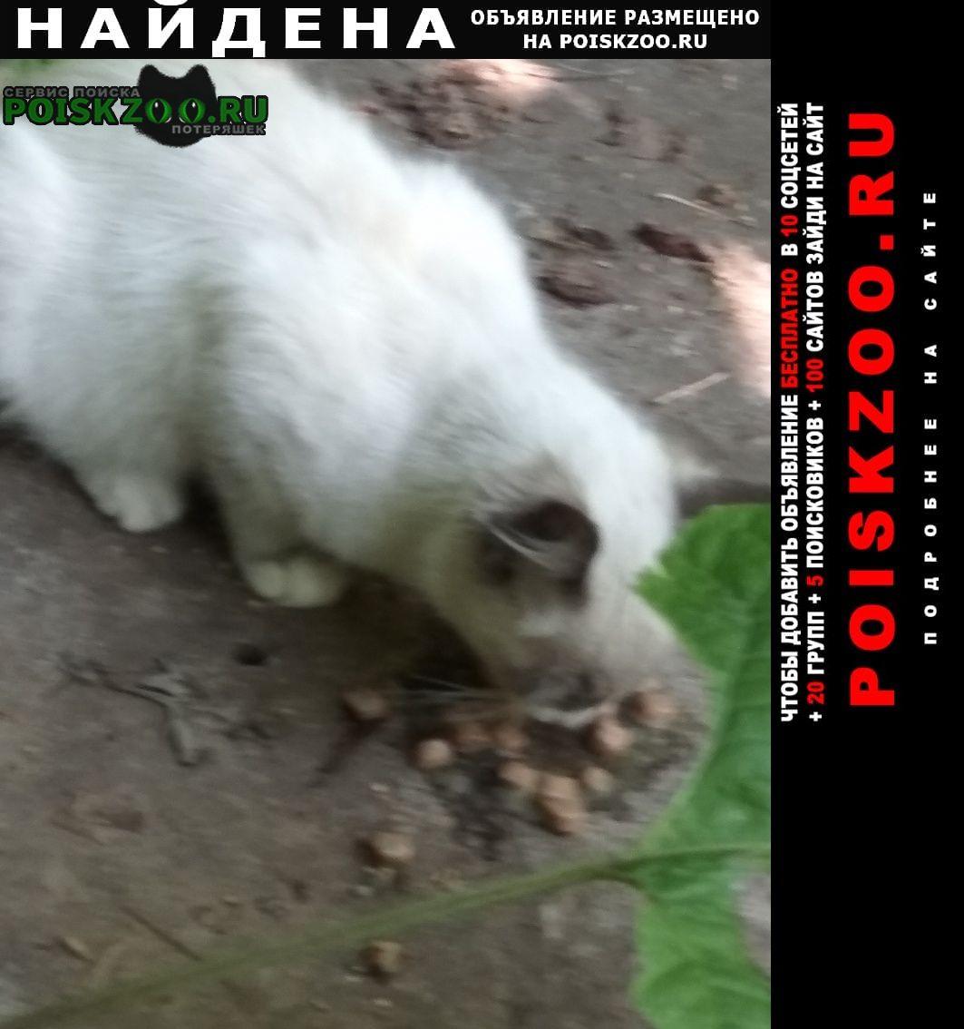 Найдена кошка очень красивый котенок Казань