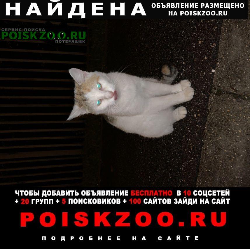 Найдена кошка нашлась Москва