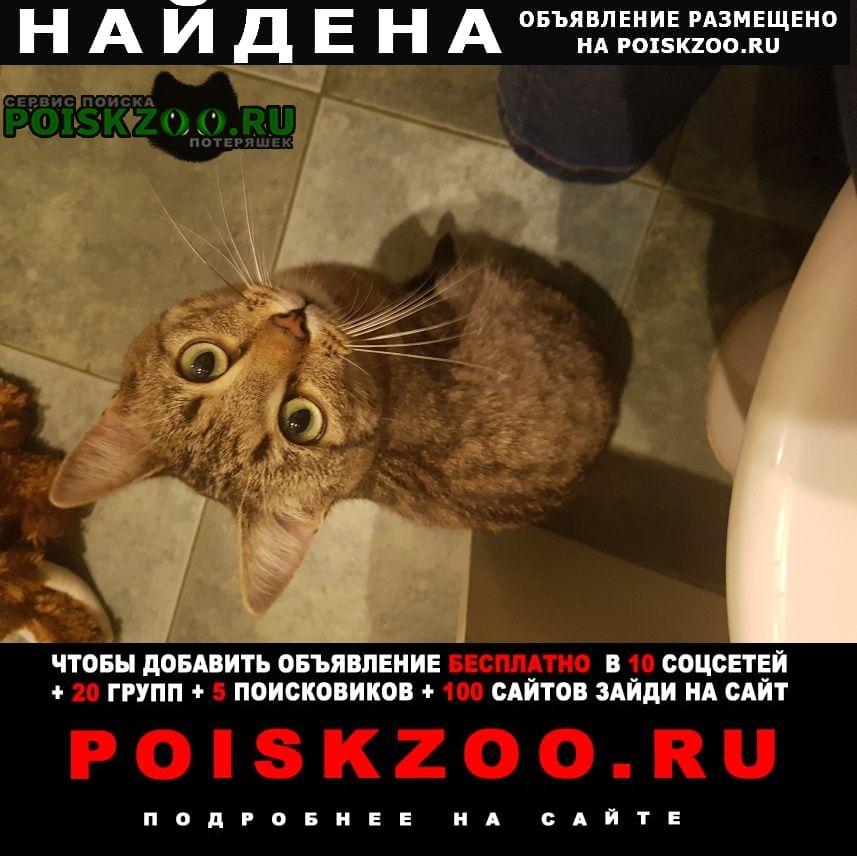 Найдена кошка полосатый кот Москва