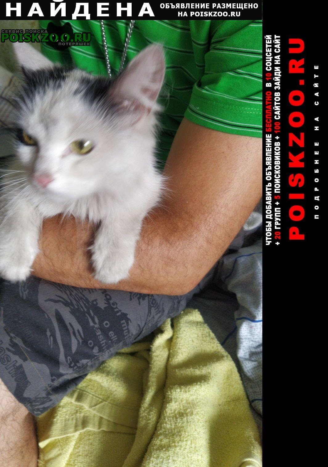 Найдена кошка беленькая, пушистая с серыми пятнами Прокопьевск