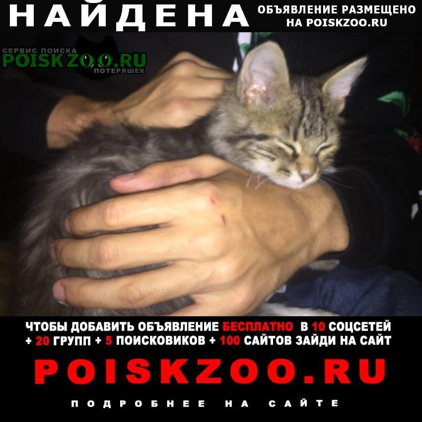 Найдена кошка с красным ошейником Липецк