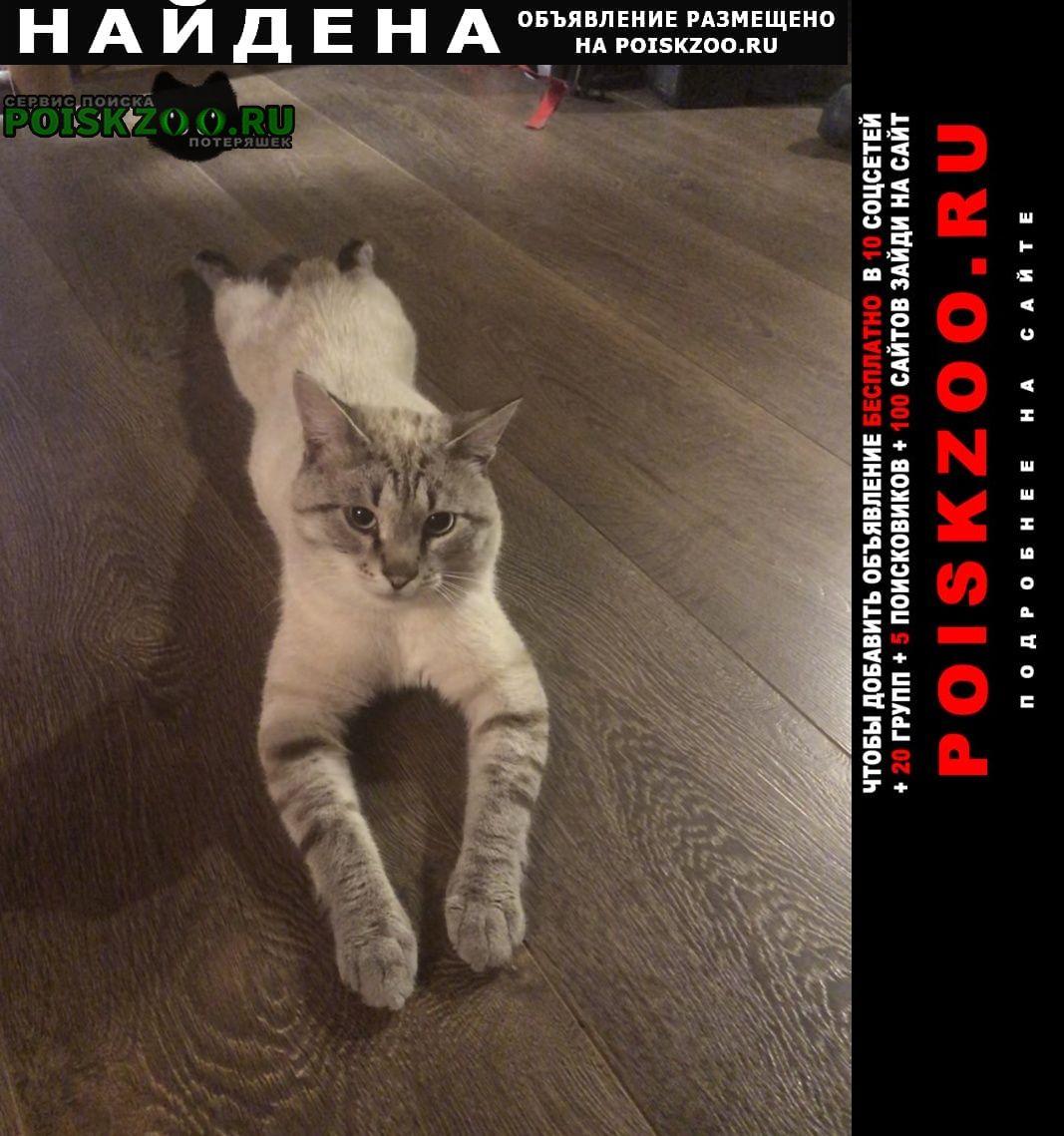 Найдена кошка нашли к деревне карытово Киржач