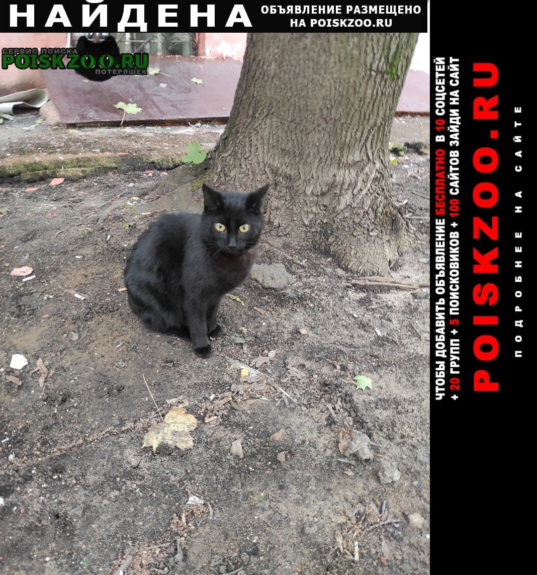 Найдена кошка черный кот Москва