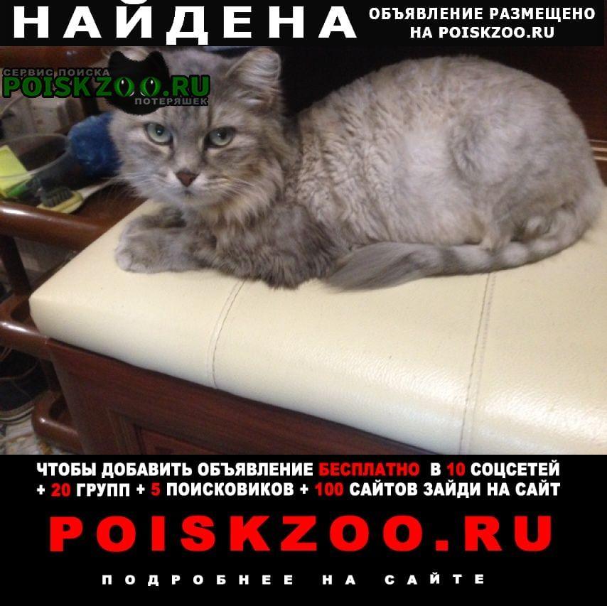 Найдена кошка Ханты-Мансийск