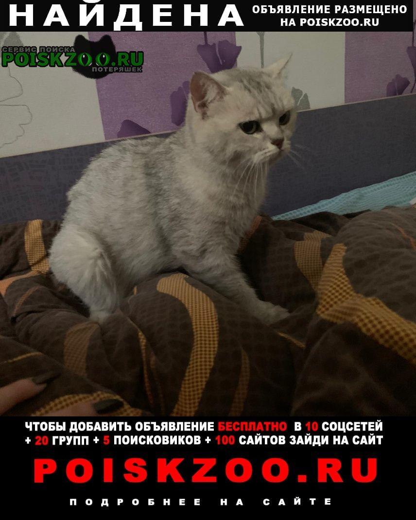 Найдена кошка кошечка. Москва
