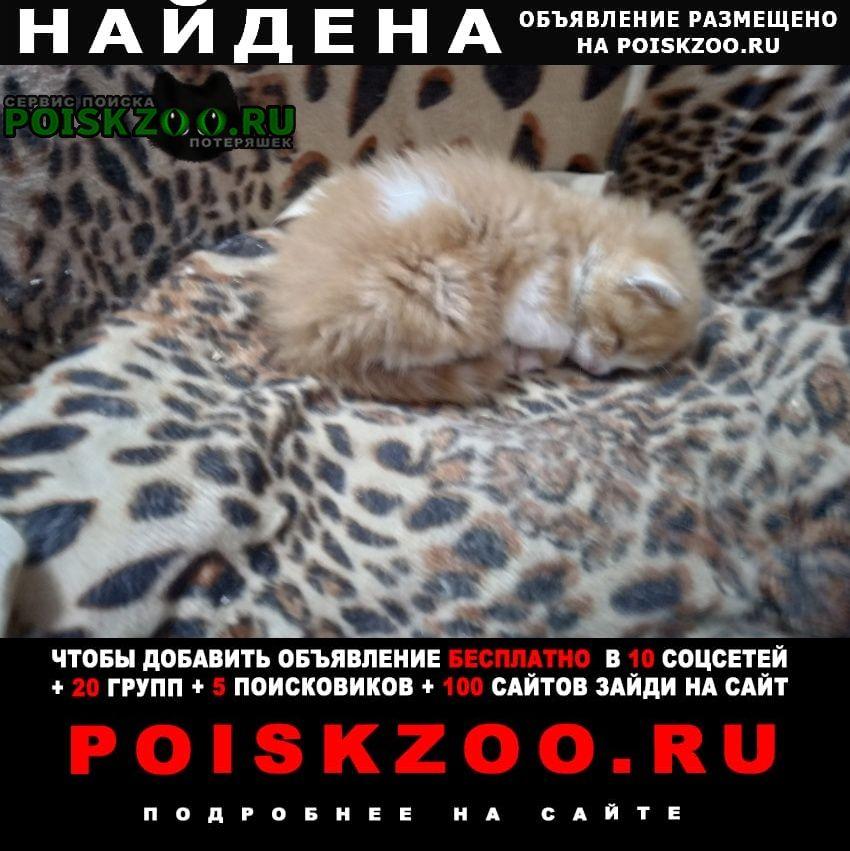 Найдена кошка Таганрог
