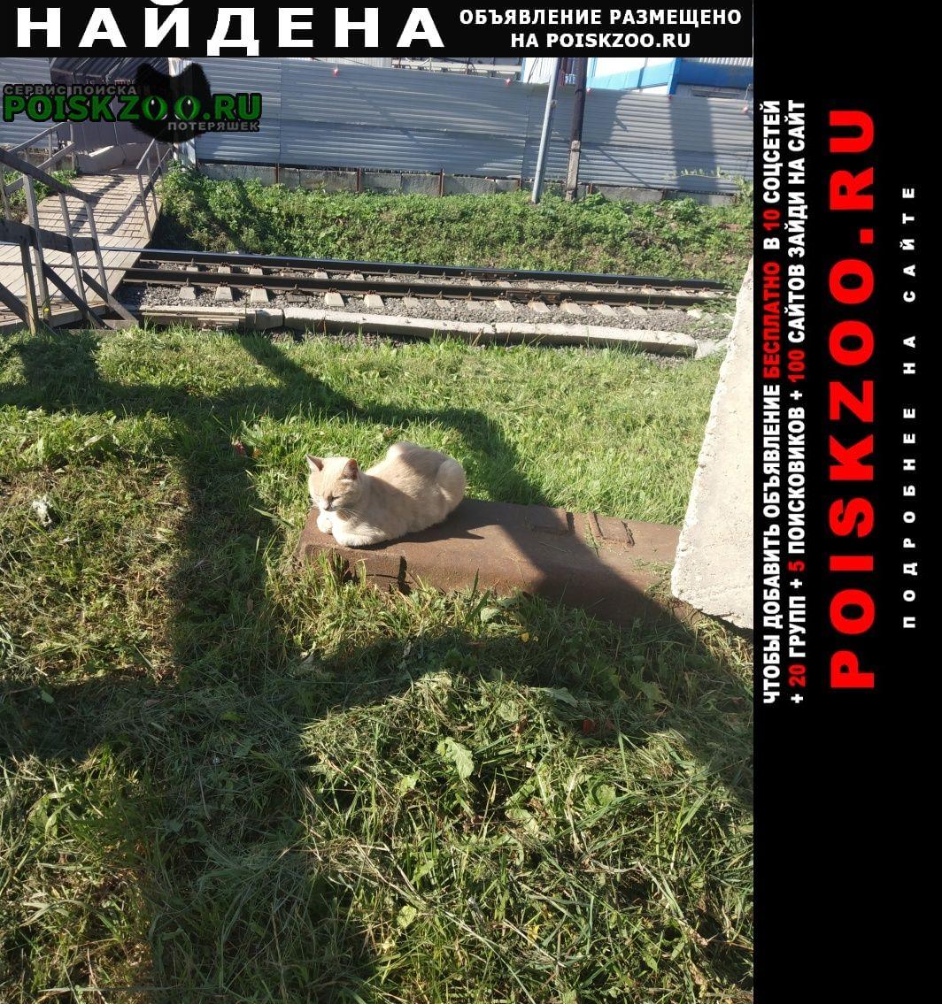 Найдена кошка недалеко от мцк окружная. Москва