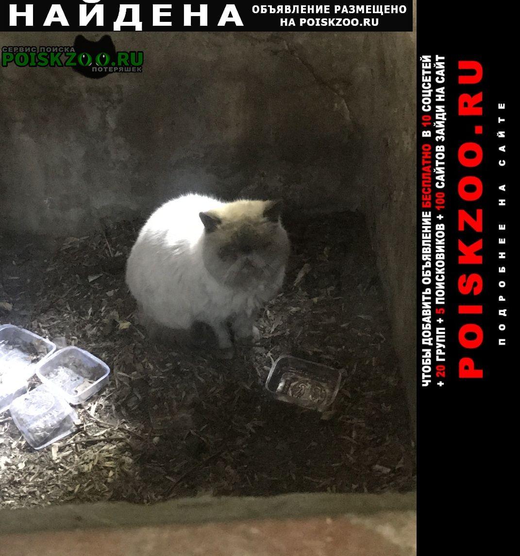 Найдена кошка или кот Москва
