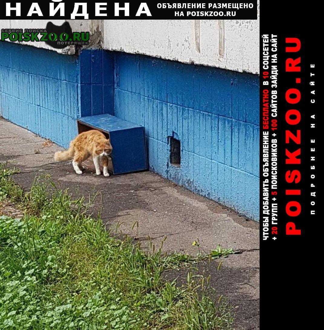 Найдена кошка солнцево Москва
