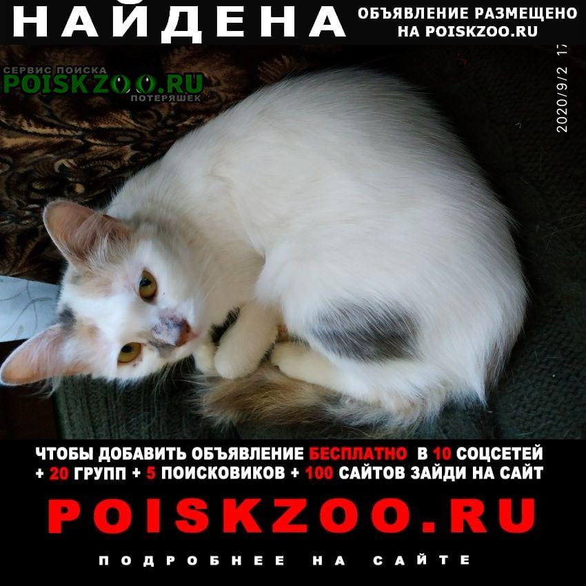 Найдена кошка трёхцветная центральный ра Санкт-Петербург