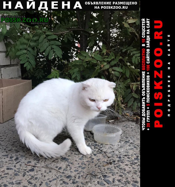 Найдена кошка белая шотландская вислоухая Рыбинск