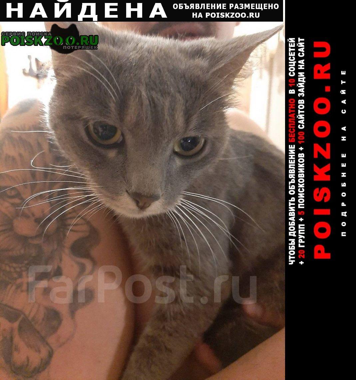 Найдена кошка 1 сентября на вострецова Владивосток