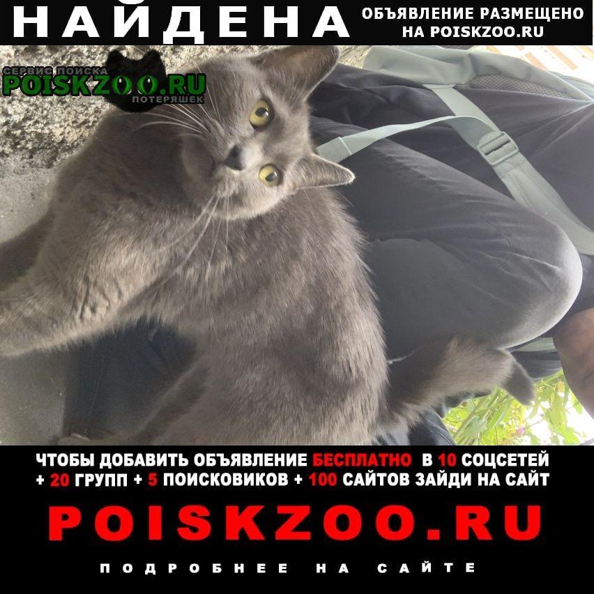 Найдена кошка белградская 26 Санкт-Петербург