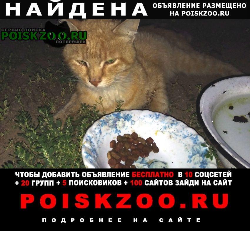 Найдена кошка рыжий кот Раменское