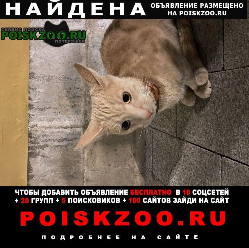 Найдена кошка рыжая, молодая с антиблошинным ошейником Москва