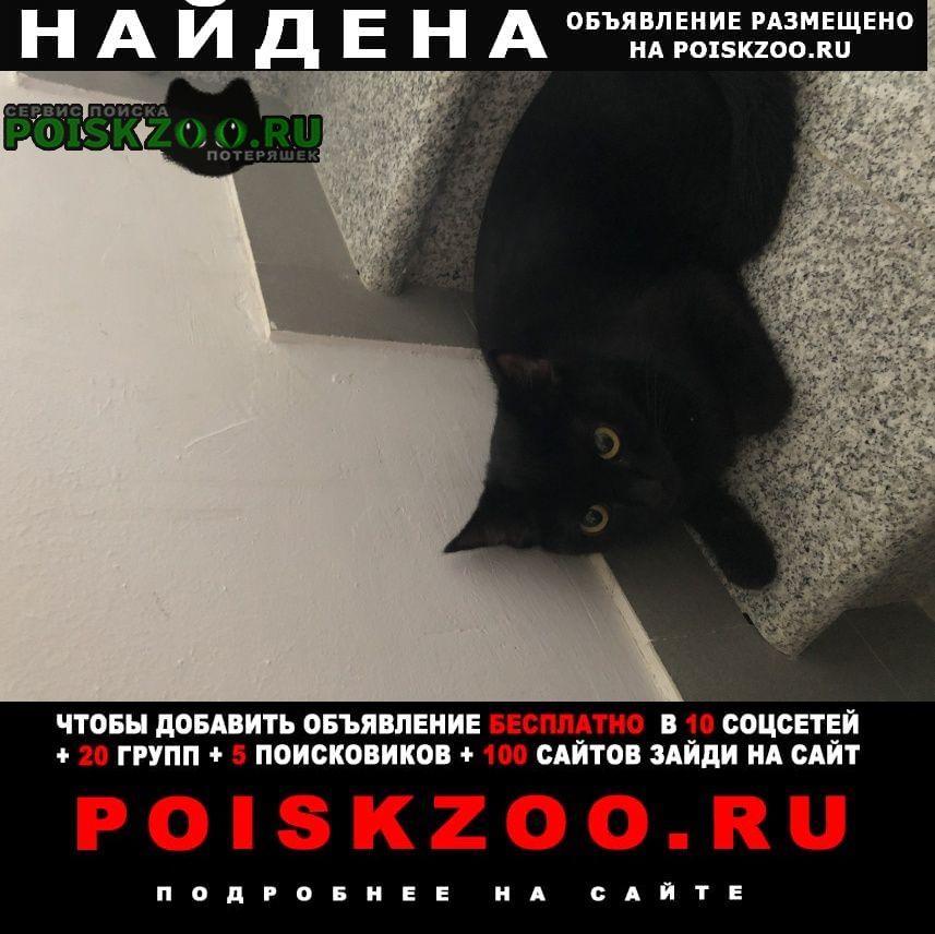 Найдена кошка британская 6-8 мес Ставрополь