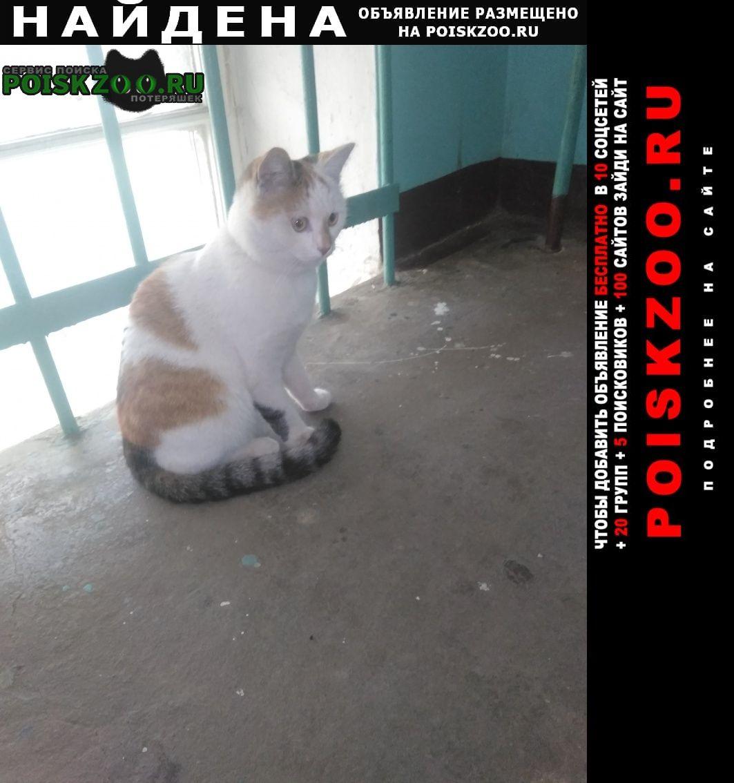 Найдена кошка в ошейнике(скорее всего от блох) Иваново