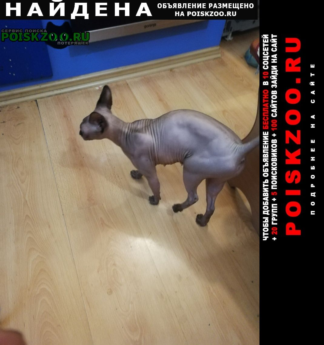 Найдена кошка канадский сфинкс Тимашевск