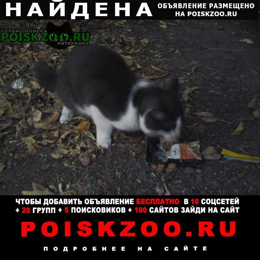 Найдена кошка (кот) на уралмаше Екатеринбург