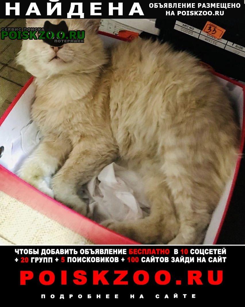 Найдена кошка рыжий кот Шахты