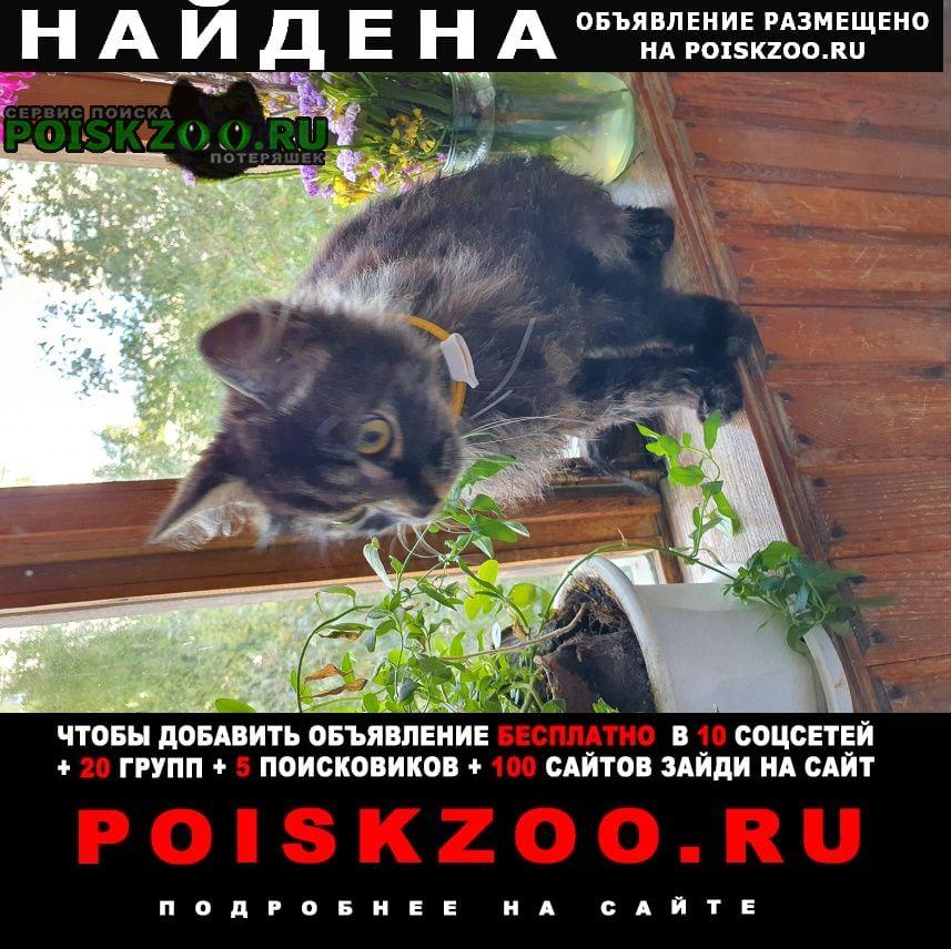 Найдена кошка кот Екатеринбург
