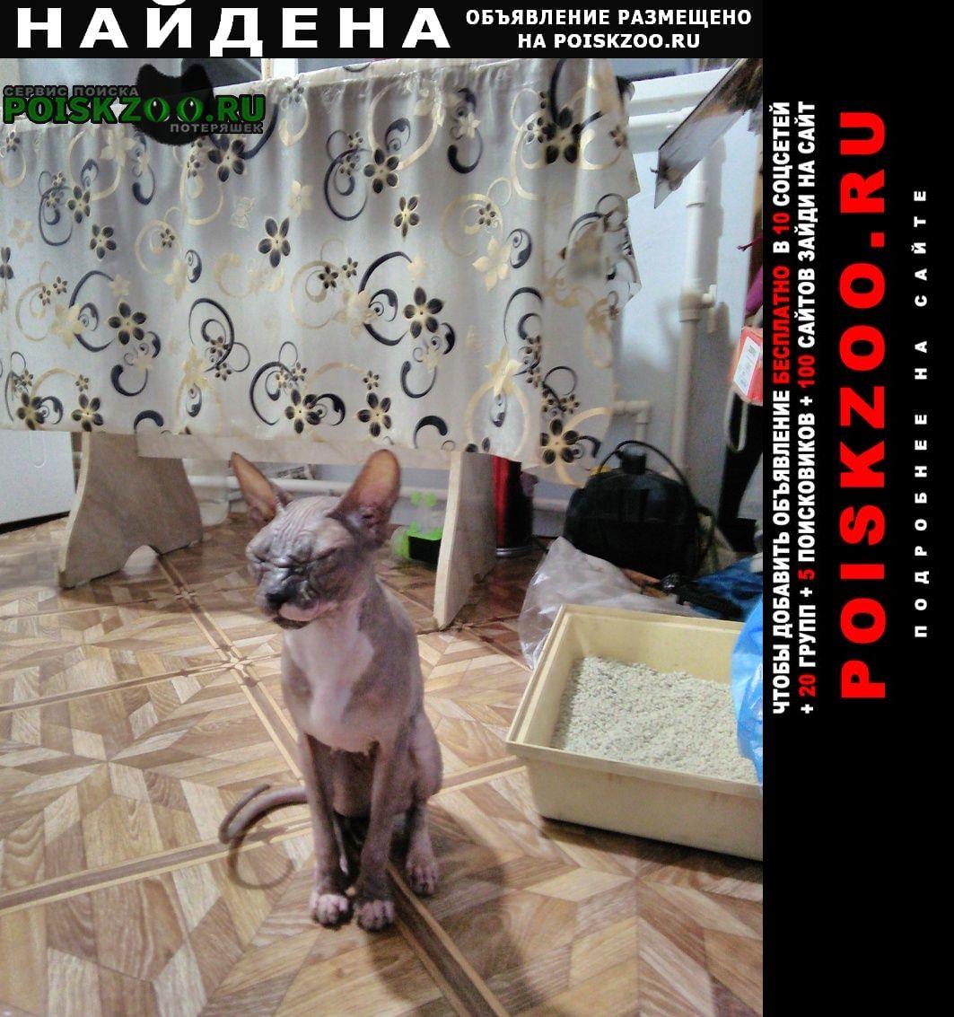 Найдена кошка породы сфинкс, без шерсти Донской (Ростовская обл.)