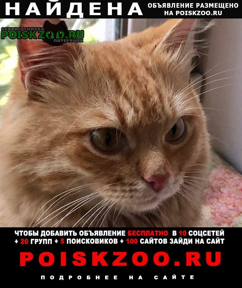 Найден кот Йошкар-Ола